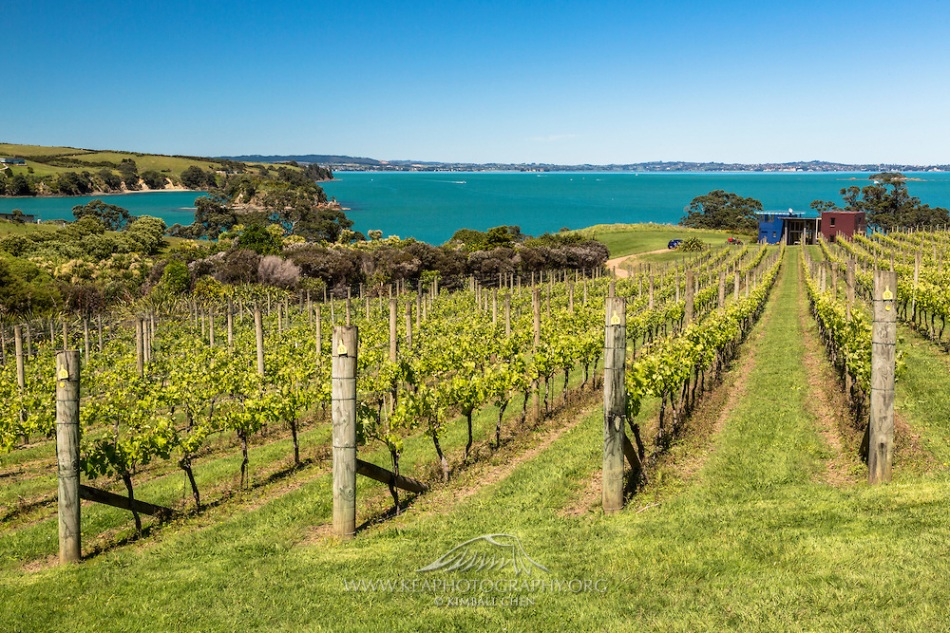 Coastal-Vineyard-on-Waiheke-Island-H7C8794.jpg